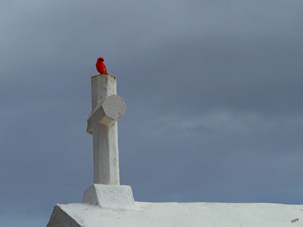 La croix du cardinal