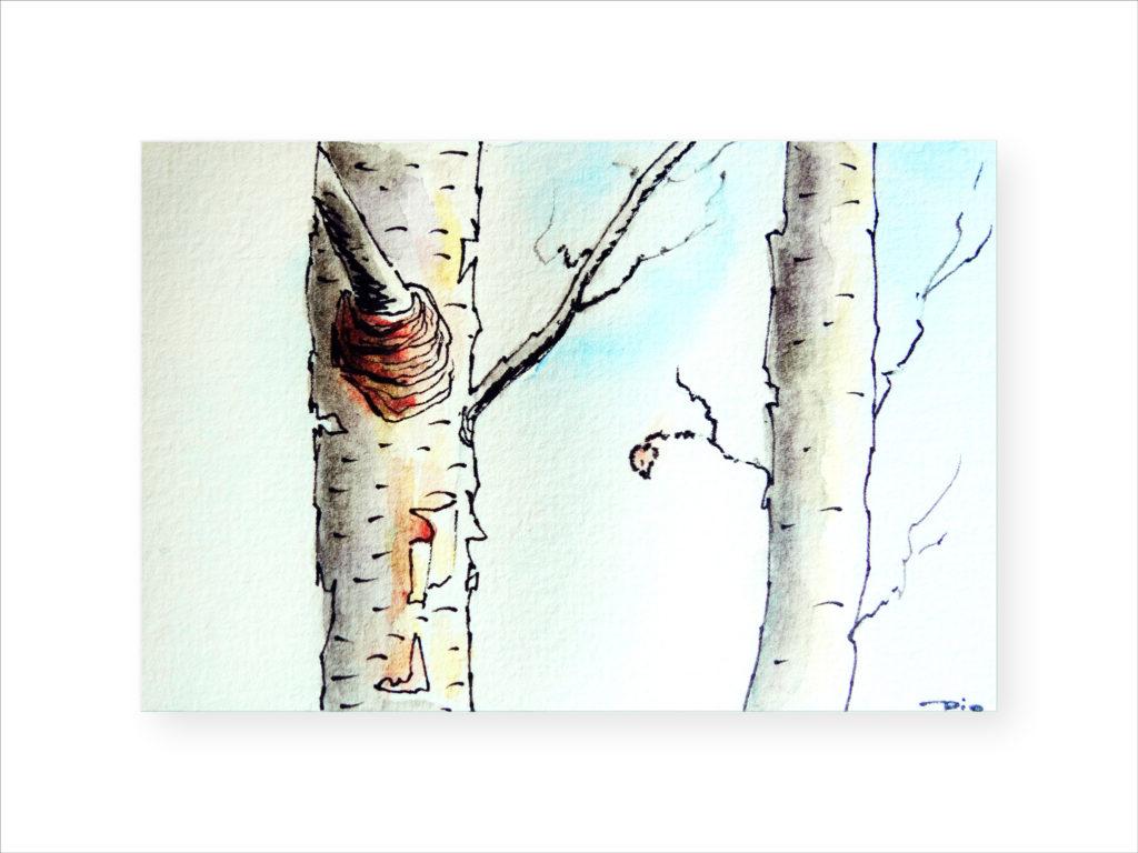 peinture, aquarelle, bouleau